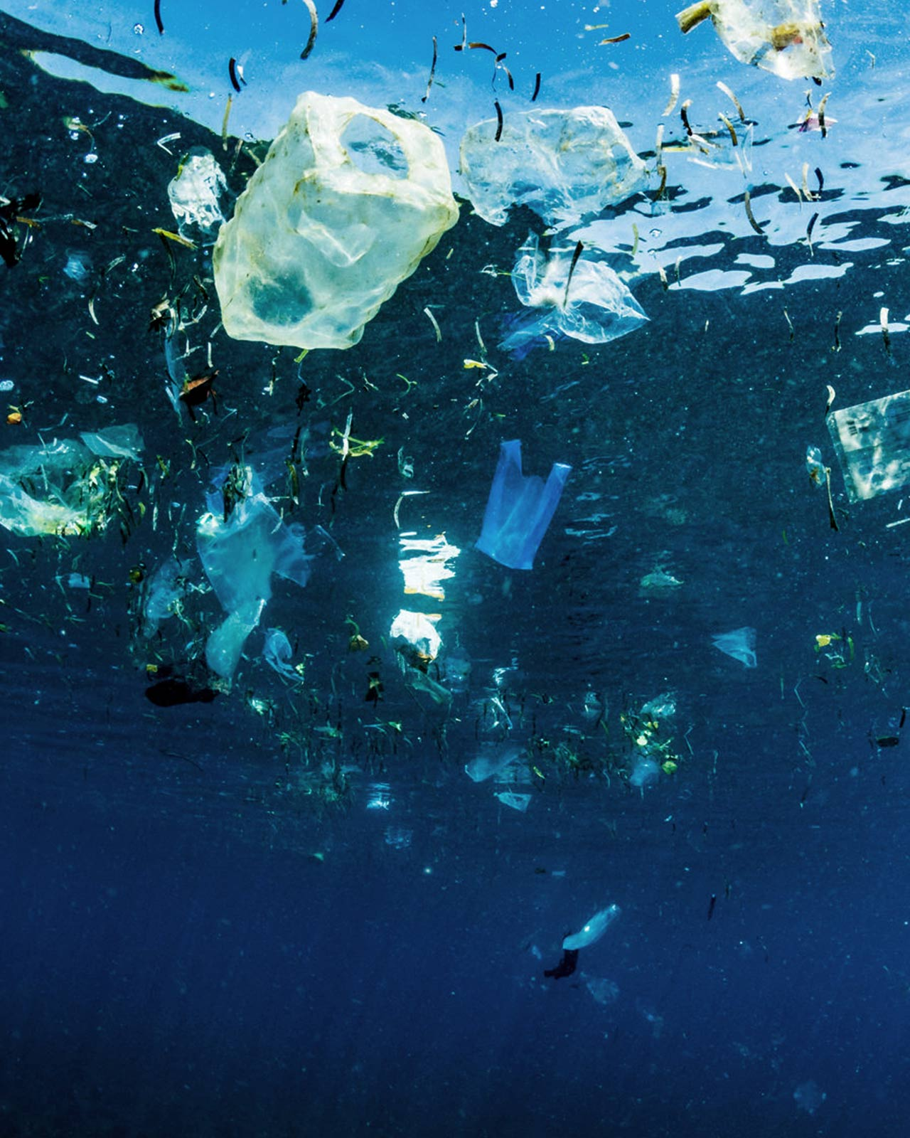 An image of plastic and trash polluting the ocean (something we'd never do!).